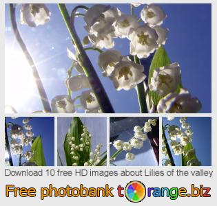 images free photo bank tOrange offers free photos from the section:  lilies-valley