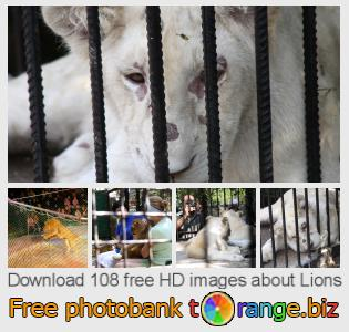 Image bank tOrange offers free photos from the section:  lions