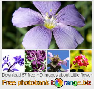 images free photo bank tOrange offers free photos from the section:  little-flower