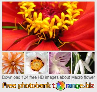 Image bank tOrange offers free photos from the section:  macro-flower