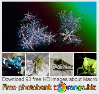 images free photo bank tOrange offers free photos from the section:  macro