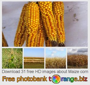 images free photo bank tOrange offers free photos from the section:  maize-corn