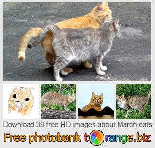 Image bank tOrange offers free photos from the section:  march-cats