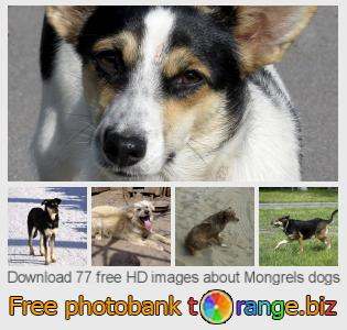 images free photo bank tOrange offers free photos from the section:  mongrels-dogs