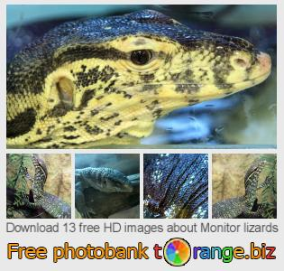 images free photo bank tOrange offers free photos from the section:  monitor-lizards