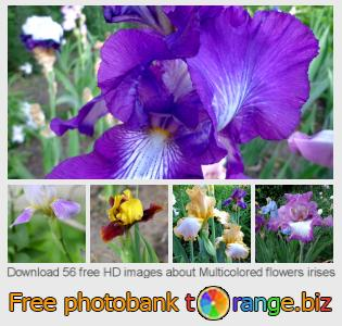 Image bank tOrange offers free photos from the section:  multicolored-flowers-irises