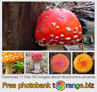 images free photo bank tOrange offers free photos from the section:  mushrooms-amanita