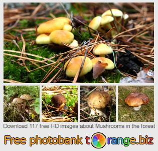 images free photo bank tOrange offers free photos from the section:  mushrooms-forest