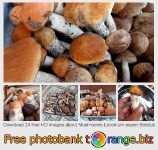 images free photo bank tOrange offers free photos from the section:  mushrooms-leccinum-aspen-boletus