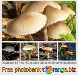 images free photo bank tOrange offers free photos from the section:  mushrooms-toadstools
