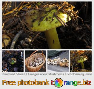 images free photo bank tOrange offers free photos from the section:  mushrooms-tricholoma-equestre