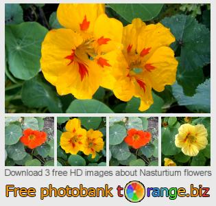 images free photo bank tOrange offers free photos from the section:  nasturtium-flowers