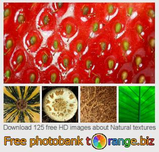 Image bank tOrange offers free photos from the section:  natural-textures