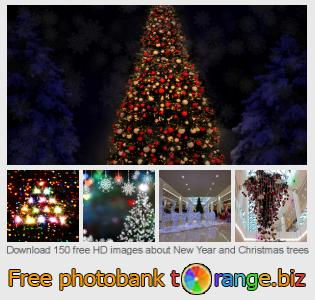 images free photo bank tOrange offers free photos from the section:  new-year-christmas-trees