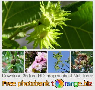 Image bank tOrange offers free photos from the section:  nut-trees