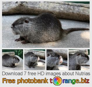 images free photo bank tOrange offers free photos from the section:  nutrias