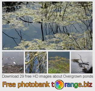 images free photo bank tOrange offers free photos from the section:  overgrown-ponds