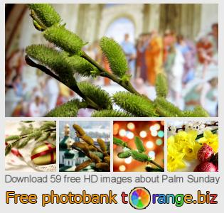 Image bank tOrange offers free photos from the section:  palm-sunday