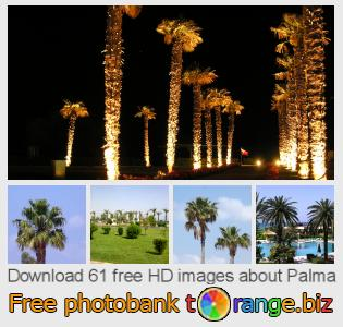 images free photo bank tOrange offers free photos from the section:  palma