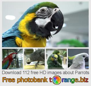 images free photo bank tOrange offers free photos from the section:  parrots