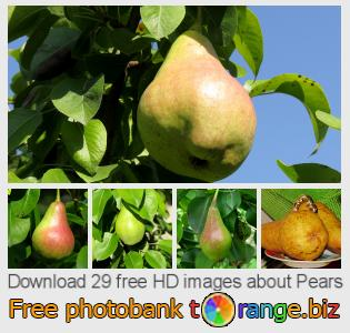 images free photo bank tOrange offers free photos from the section:  pears