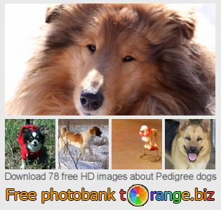 images free photo bank tOrange offers free photos from the section:  pedigree-dogs