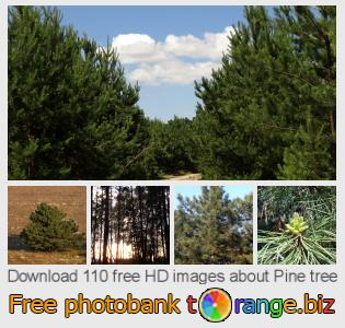 images free photo bank tOrange offers free photos from the section:  pine-tree
