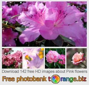 images free photo bank tOrange offers free photos from the section:  pink-flowers