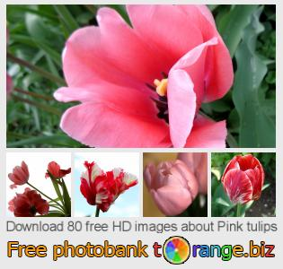 Image bank tOrange offers free photos from the section:  pink-tulips