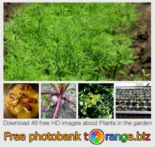 images free photo bank tOrange offers free photos from the section:  plants-garden