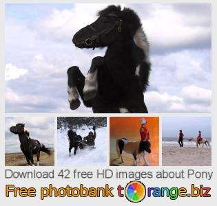 Image bank tOrange offers free photos from the section:  pony