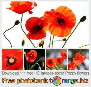 Image bank tOrange offers free photos from the section:  poppy-flowers