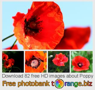 Image bank tOrange offers free photos from the section:  poppy