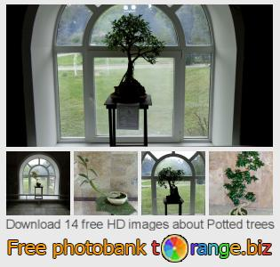 images free photo bank tOrange offers free photos from the section:  potted-trees