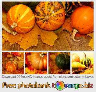 Image bank tOrange offers free photos from the section:  pumpkins-autumn-leaves