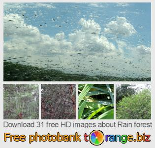 images free photo bank tOrange offers free photos from the section:  rain-forest