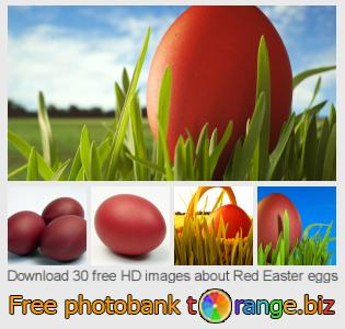 Image bank tOrange offers free photos from the section:  red-easter-eggs