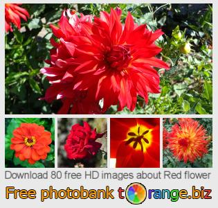 Image bank tOrange offers free photos from the section:  red-flower