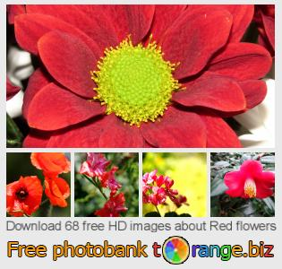 images free photo bank tOrange offers free photos from the section:  red-flowers