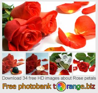 images free photo bank tOrange offers free photos from the section:  rose-petals