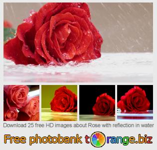 images free photo bank tOrange offers free photos from the section:  rose-reflection-water