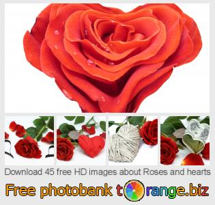 images free photo bank tOrange offers free photos from the section:  roses-hearts