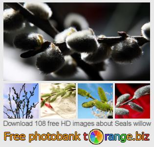 Image bank tOrange offers free photos from the section:  seals-willow