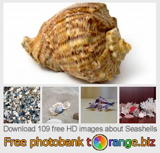 images free photo bank tOrange offers free photos from the section:  seashells