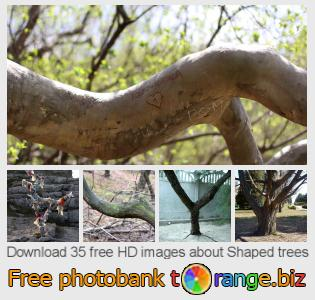 images free photo bank tOrange offers free photos from the section:  shaped-trees