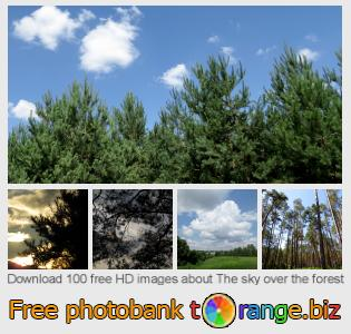 Image bank tOrange offers free photos from the section:  sky-over-forest