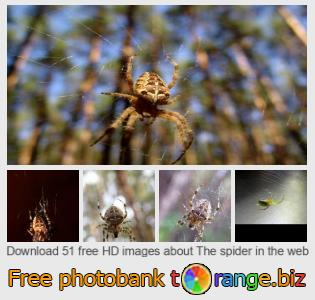 images free photo bank tOrange offers free photos from the section:  spider-web