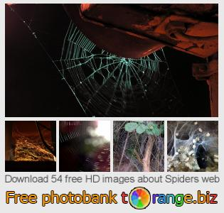 images free photo bank tOrange offers free photos from the section:  spiders-web