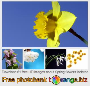 Image bank tOrange offers free photos from the section:  spring-flowers-isolated