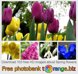 images free photo bank tOrange offers free photos from the section:  spring-flowers